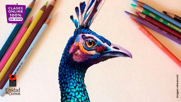Dibujo Y Pintura Con Lápices De Colores (De 6 A 10 Años)